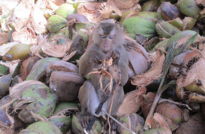 Unemployed primate released into wild due to 'depression' | The Thaiger