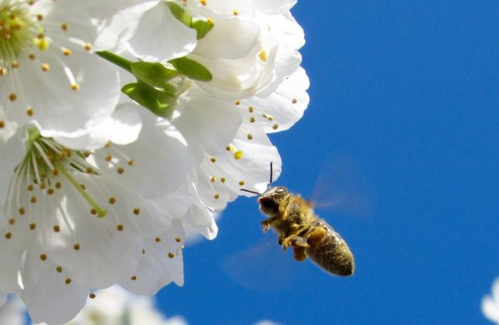 Gardening: Pollinators big and small | The Thaiger