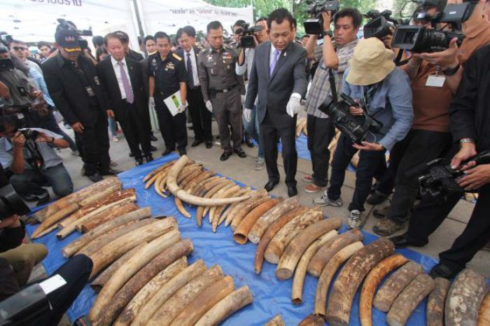 B200mn of African tusks seized in raid | The Thaiger