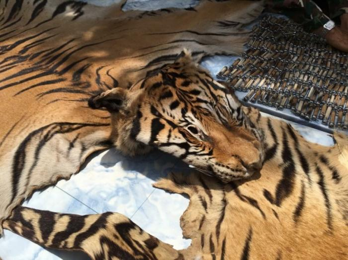 UN issues statement after more horrors discovered at Tiger Temple | The Thaiger