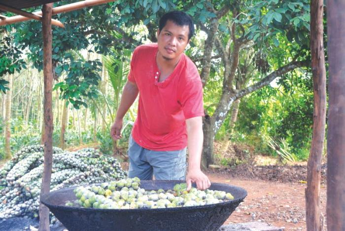 Krabi locals selling palm seeds to boost income | The Thaiger
