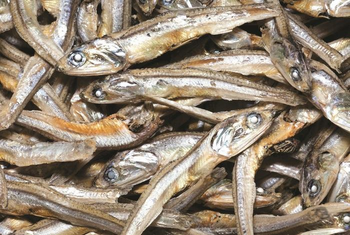 Local fishermen dish out 'fishy' details | The Thaiger