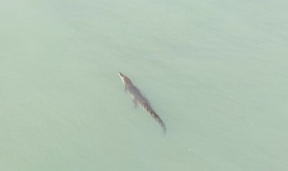 Three metre crocodile spotted off Bang Tao beach | The Thaiger
