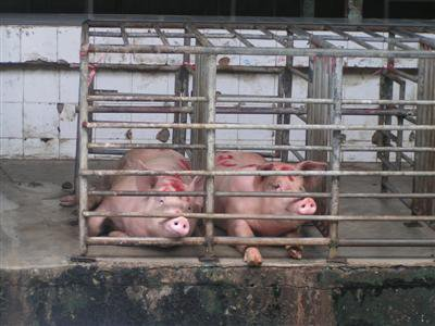 Pork sales plunged during Vegetable Frenzy | The Thaiger