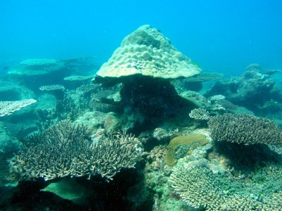 """New' reef bigger than any in the region 