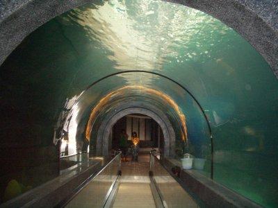 Pre-Songkran re-opening for aquarium | The Thaiger