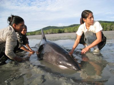 Dolphins rescued from receding tide | The Thaiger