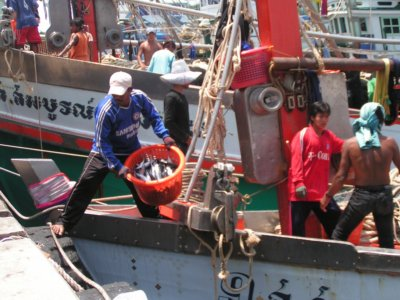 """Phuket rated Thailand's first """"hygienic"""" fishing port 
