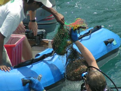 Phuket divers unite for underwater cleanup | The Thaiger