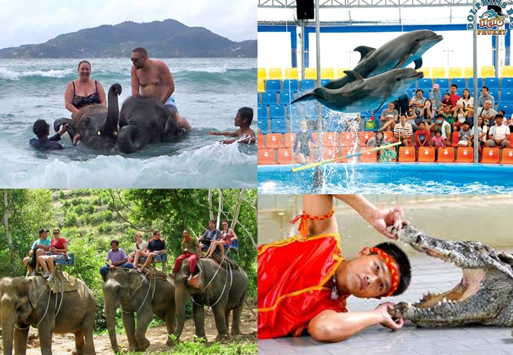 Animal shows in Phuket. 'Not in my back yard'! | The Thaiger