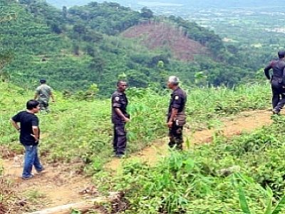 Officials raid illegal logging site near Phuket Town | The Thaiger