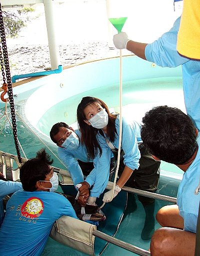 Keeping dolphins in captivity is inhumane: Poll | The Thaiger