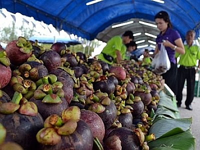 Phuket enjoys a fruity affair | The Thaiger