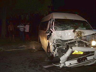Van crash kills two Phuket buffalo, tourists safe | The Thaiger