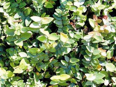 Phuket Gardening: Climbing the walls | The Thaiger