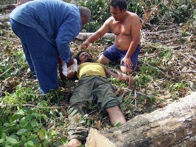 Phuket rubber tapper injured by falling tree | The Thaiger