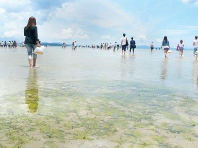 Phuket Lifestyle – Helping to save Phang Nga Bay | The Thaiger
