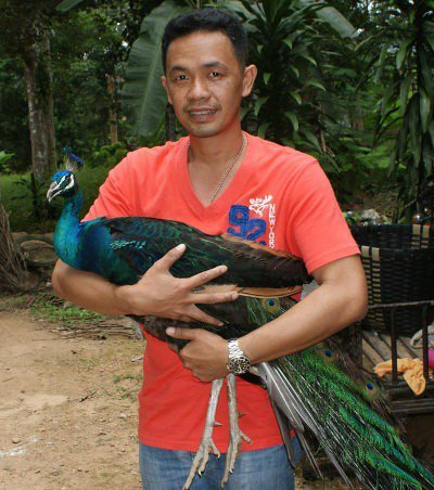 """Peacock delivers """"pheasant surprise' in Krabi 