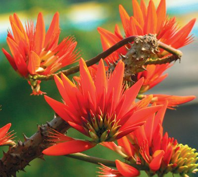 Phuket Gardening – put a cork in your garden | The Thaiger