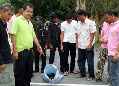 Snakes in a sack seized on Koh Lanta | The Thaiger