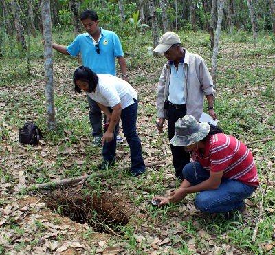 Phuket News: Sinkholes threaten Krabi rubber plantation | The Thaiger