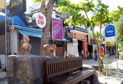 Phuket Gazette: Tourists go ape for Krabi bus stops | The Thaiger