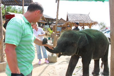Two baby elephants seized in Phuket | The Thaiger