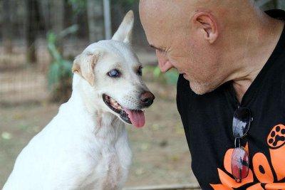 Phuket's Soi Dog Foundation expands into Bangkok | The Thaiger
