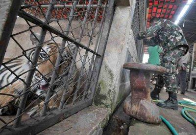 Phuket Gazette: Exotic wildlife worth Bt200m found | The Thaiger