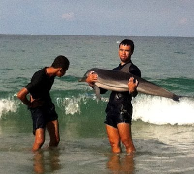 Stranded dolphin saved in Phuket | The Thaiger