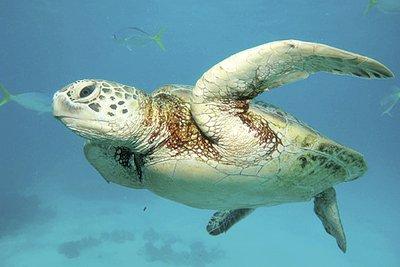 Phuket Lifestyle: Low season diving | The Thaiger