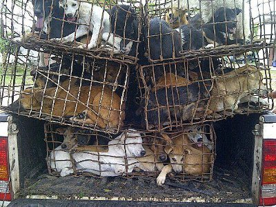 """Phuket's Soi Dogs launches """"Trade of Shame' campaign against dog-meat trade 