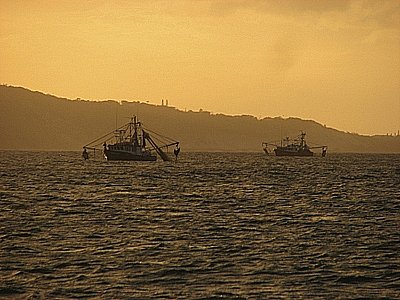 Phuket Environment: Fishing till the seas run dry | The Thaiger
