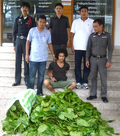 Dealer busted after kratom smuggled into Phuket as 'fresh vegetables' | The Thaiger