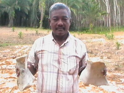 Fossil shell cemetery discovered in Krabi | Thaiger