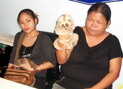 Man with gibbon escapes Bangla loris raids | Thaiger