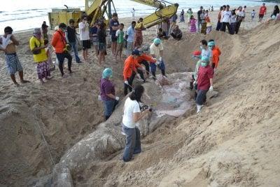 Phuket marine agency checks dead whale shark samples for heavy metal contamination   Thaiger