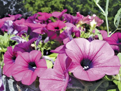 Phuket Gardening: More entries in the Annual Report | The Thaiger