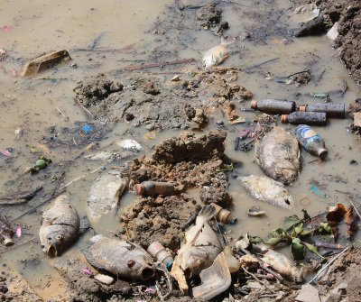 Phuket mass fish deaths put flood-prevention project on hold | The Thaiger