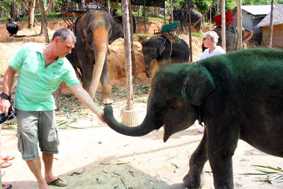 Laguna Phuket issues statement over baby elephants | Thaiger