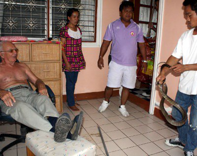 Snake removed from Norwegian's Phuket bungalow | The Thaiger
