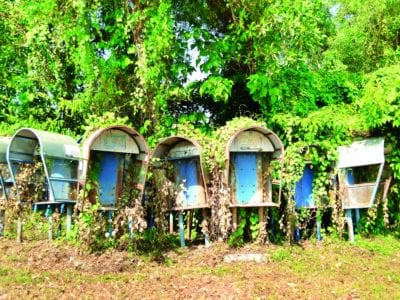 Phuket telephones: Phone booths dying but some to stay – for now | The Thaiger