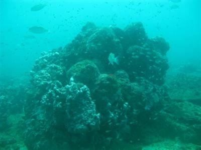 New coral reef found near Phuket | The Thaiger