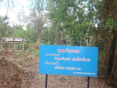 MNRE orders halt to Phuket mangrove destruction | The Thaiger