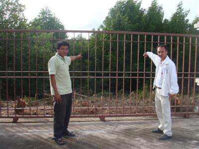 Phuket mangroves to be cleared for new road | The Thaiger