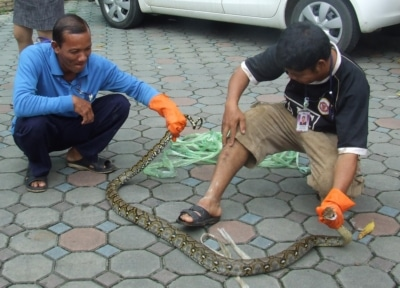 Snake shock at Phuket hospital, man bitten | The Thaiger