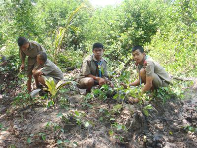 Mangroves planted in Phuket to honor HM The Queen | The Thaiger