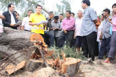Phuket residents protest destruction of ancient trees | The Thaiger