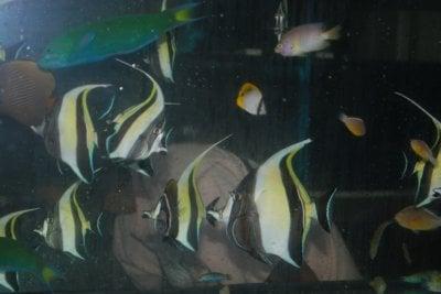 Phuket police bust fish poaching ring | The Thaiger