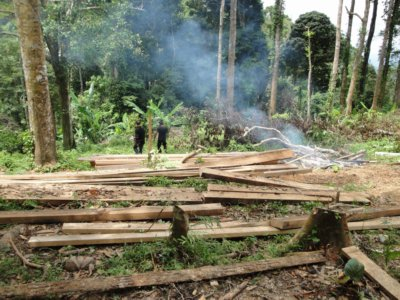 Logging destroys 18 rai of Phuket forest | The Thaiger